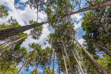 森林 林業イメージ