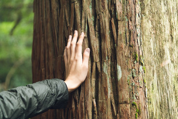 木に触れる女性の手