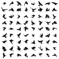 Large set of birds flock. Flying crows birds. Vector.