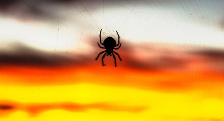Spider Silhoute