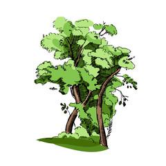 Vector hand drawn illustration of big colorful tree.Detailed ink illustration.Oak tree sketch.