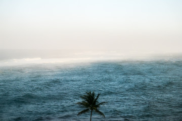 A palm tree overlooking the ocean
