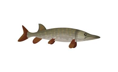 Flat vector icon of large barracuda fish. Predatory tropical fish. Sea animal. Marine biology. Underwater life theme