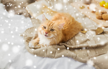 Fototapete - pets, hygge and winter concept - red tabby cat lying on blanket at home over snow