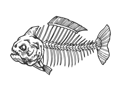 Piranha fish skeleton animal engraving vector illustration. Scratch board style imitation. Black and white hand drawn image.