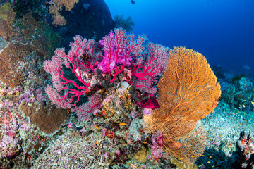 Tropical fish and colorful corals on a healthy tropical coral reef