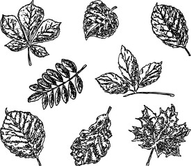 A set of different trees leaves