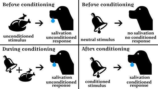 pavlov psychology response