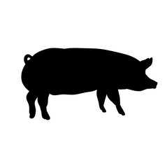 silhouette pig, isolated