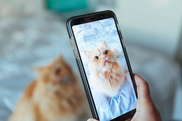 cat posing for a picture taking by the phone
