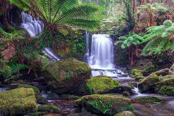 Horseshoe Falls, Tasmania, Australia. Flowing water through the green rocky falls in Mount Field National Park.