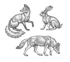 Рисунок тушью, дикие лесные животные. Лиса, волк и заяц на белом фоне.