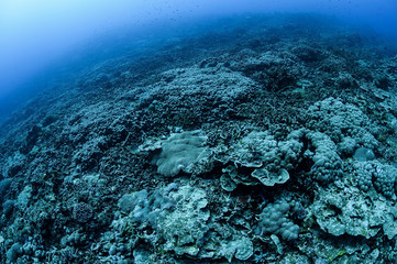 Fototapeten Riff Bleached and Dead Coral Reefs of Ishigaki, Okinawa Japan due to Rising Sea Temperatures