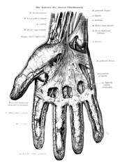 Human Hand Skeleton Vein Anatomy Black & White Vector Illustration