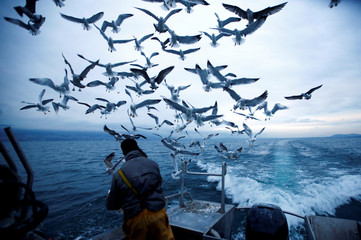 Fisherman Cyril Delley gives fishes to the gulls on Lac de Neuchatel near Portalban