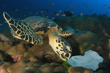 Sea Turtle eats plastic bag