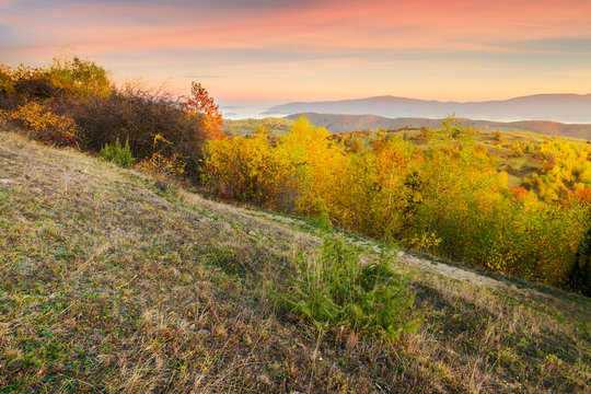 autumn sunrise in mountains. weathered grass and trees in fall foliage. valley of fog and mountain ridge in the distance. sky with blurred reddish clouds