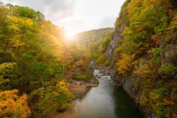 colourful forest on autumn season in Jozankei