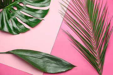 Wall Mural - Tropical leaves on color background
