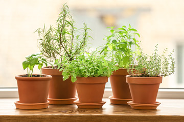 Pots with fresh aromatic herbs on wooden windowsill