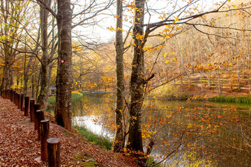 Path through forest by the lake. Nature park Grza near the Paracin, Serbia. River surrounded with forest. Autumn, sunny day with beautiful colors