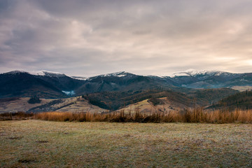 weathered grass on the meadow in mountains. cloudy november morning. distant ridge with snowy peaks