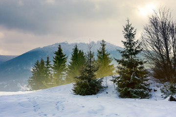 beautiful winter scenery in mountains. composite image with forest on snowy  slope and distant ridge with alpine meadow on top on a cloudy december day