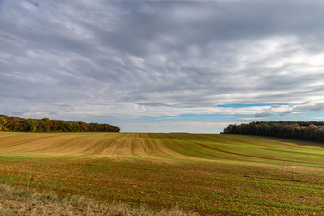 Sillons d'un champ à l'orée d'une forêt en automne