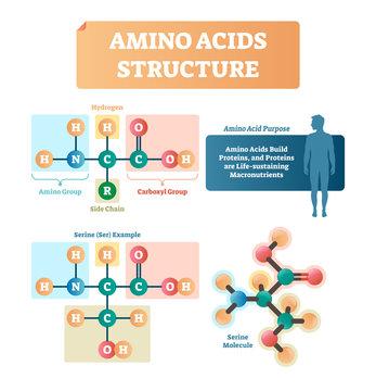 Amino acids structure vector illustration. Serine molecule diagram.