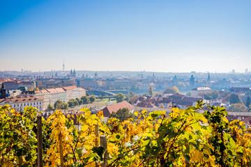 Vue sur le Vignoble de Saint-Venceslas sur la ville de Prague