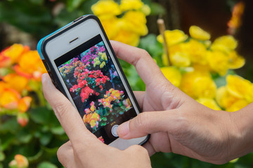 Women's hands holding mobile phone take a photo of flowers.