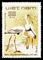 Painted Stork (Mycteria leucocephala), Birds serie, circa 1983