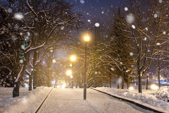 Winter night park. Christmas background.