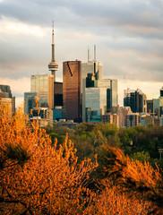 Wall Murals Toronto Downtown Toronto in Golden Light near Sunset