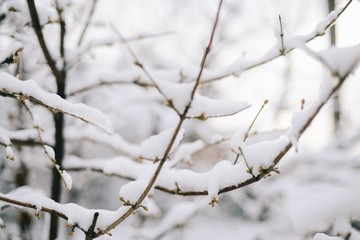 Close up of branches covered with snow