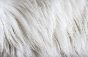Full frame of white fur