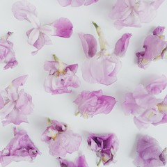 Close up of flowers on white background