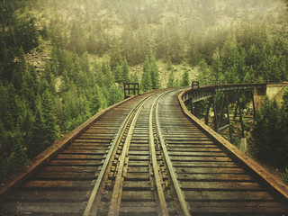 Railroad passing through forest