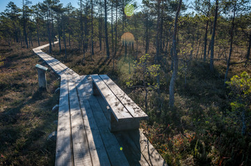 Walking wooden trail in the swamp in Cenas moorland (Cenas tirelis), Latvia. Sunny autumn day. Bog boardwalk is a popular tourist destination. Information stand and bench.