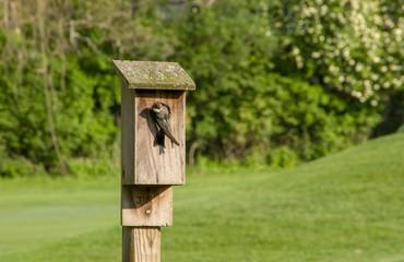 Tree Swallow House