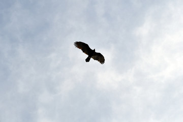 An eagle pulls his circles in the sky.