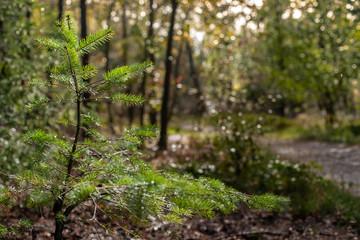 Fresh green little fir tree under a gigantic big tree shines in it  sunlight