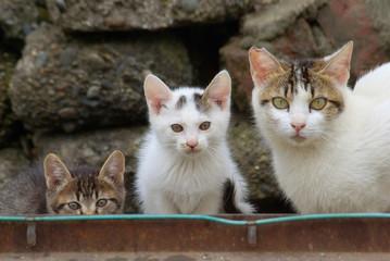 こちらを見つめる親猫と二匹の子猫