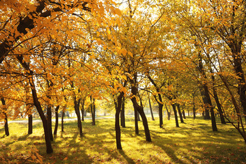 Garden Poster Beautiful autumn landscape with trees and dry leaves on ground
