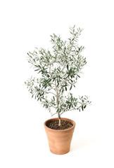 Autocollant pour porte Oliviers オリーブの鉢植え