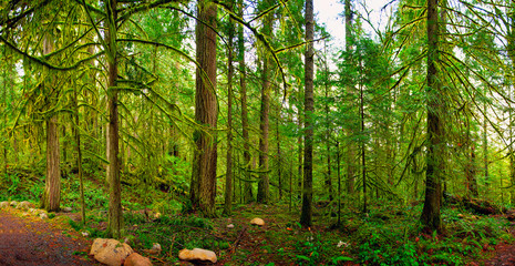 Panoramic view of the rain forest in Vancouver Island, Canada
