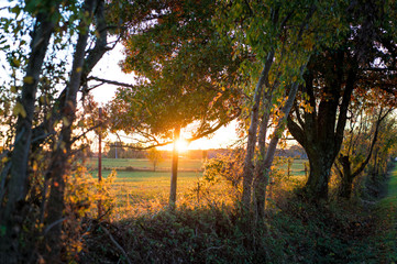 Sun shining through trees at sunset