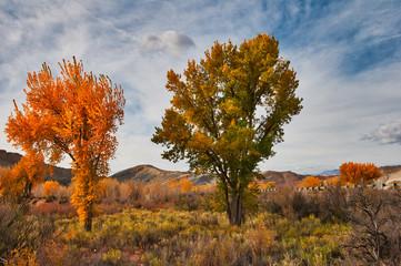 tree in autumn, Utah
