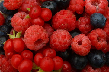 Berry harvest of summer berries of raspberry and blueberry fresh forest fruit