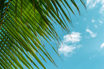 Green coco palm leaf on blue sky background. Relaxing tropical detail toned photo. Exotic place for vacation.